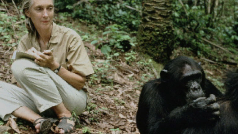 Jane Goodall By: Lucy on emaze