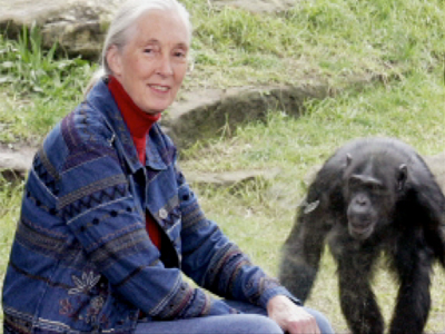 screenshot of jane goodall